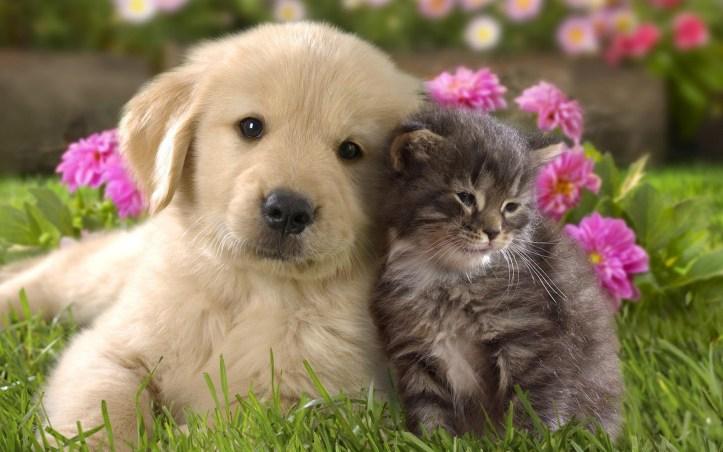 1.995 Atténuer les odeurs de chiens ou chats dans la maison.jpg
