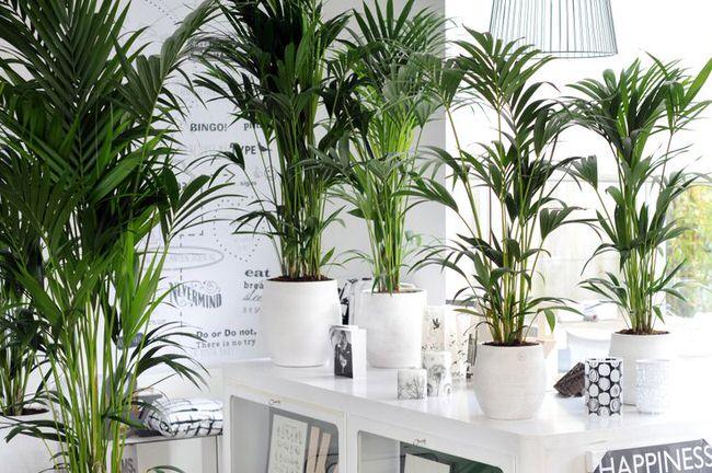 2.126 Recyclez votre eau pour arrosez vos plantes.jpg