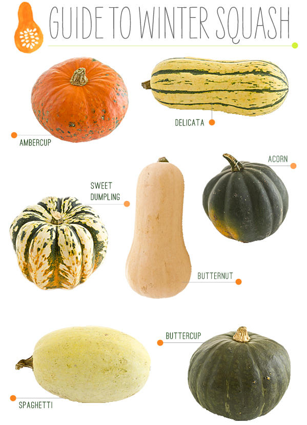 All About Winter Squash 4