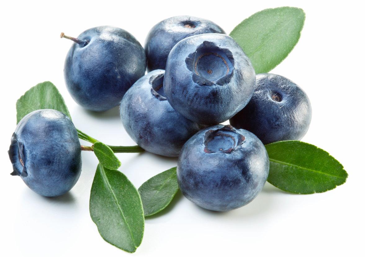 """Résultat de recherche d'images pour """"myrtille bleuet"""""""