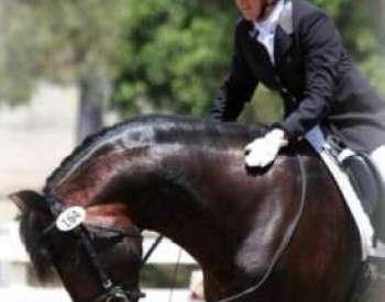 Goal Setting  |   Showing Horses