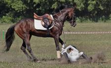 horse-fall-wide
