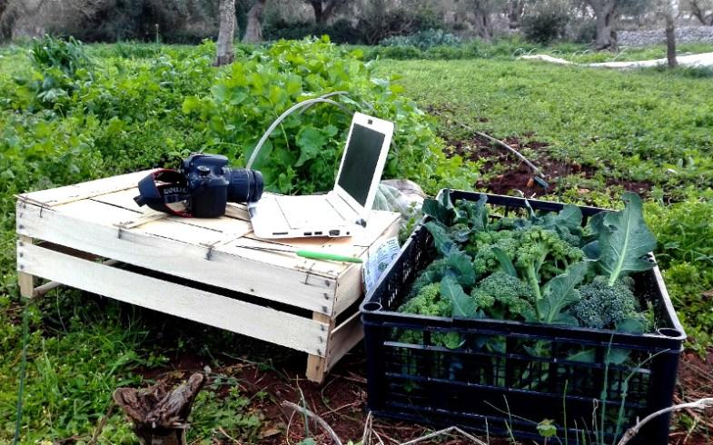 INNOVAZIONE IN AGRICOLTURA: CONTADINO 2.0