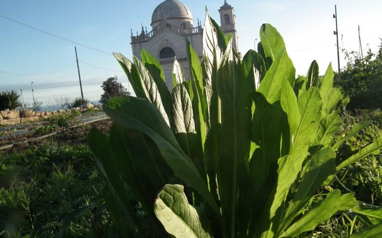 Open day agli orti sociali ai piedi delle mura di Ostuni, regno dell'agricoltura bio