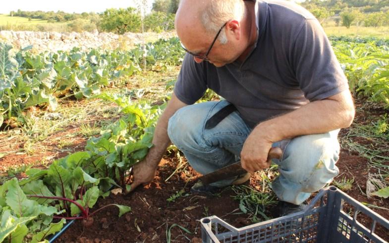 Agricoltura biologica: tecnica e conoscenza