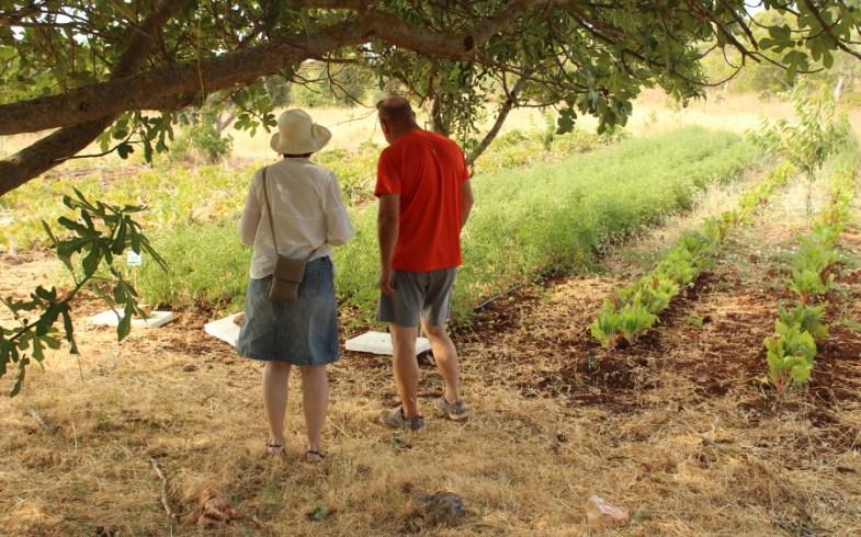 Visite guidate gratuite ai nostri orti in Contrada Cervarolo