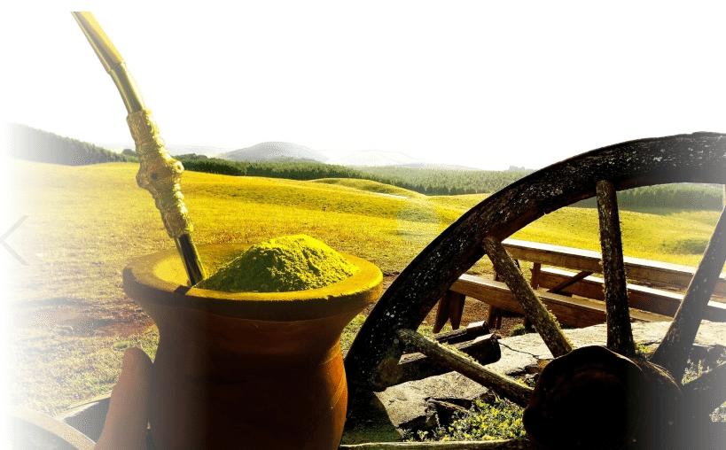 10 Benefícios Incríveis do Chimarrão para a Saúde