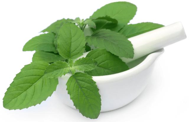 10 benefícios do manjericão para a saúde