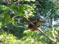 wildlife 2015 (9)