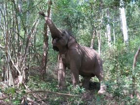 elephants-2016-13