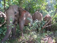 elephants-2016-6