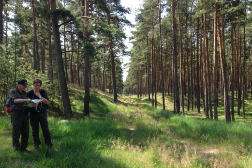 Forest survey walk