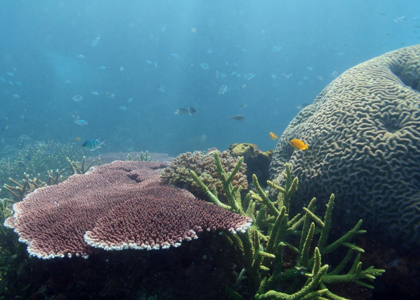 Coral Reef Conservation Amp Stewardship
