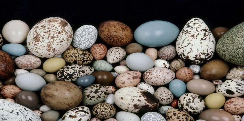 Egg Shapes