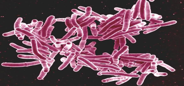 New TB Drug