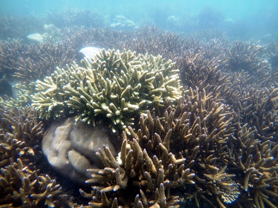Coral reefs in Gulf of Mannar