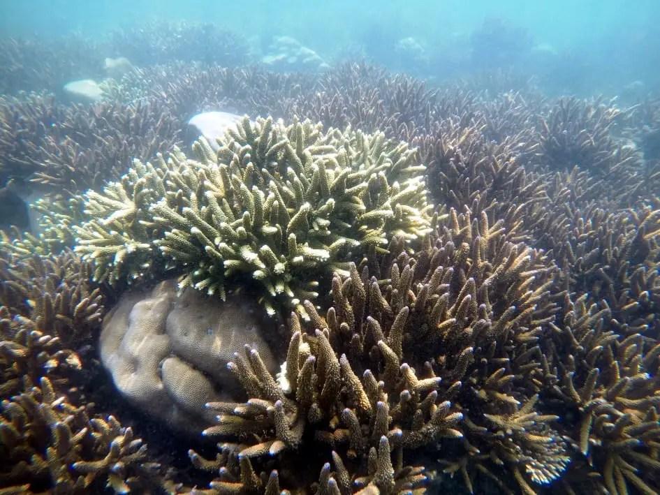 Coral reefs in Gulf of Mannar