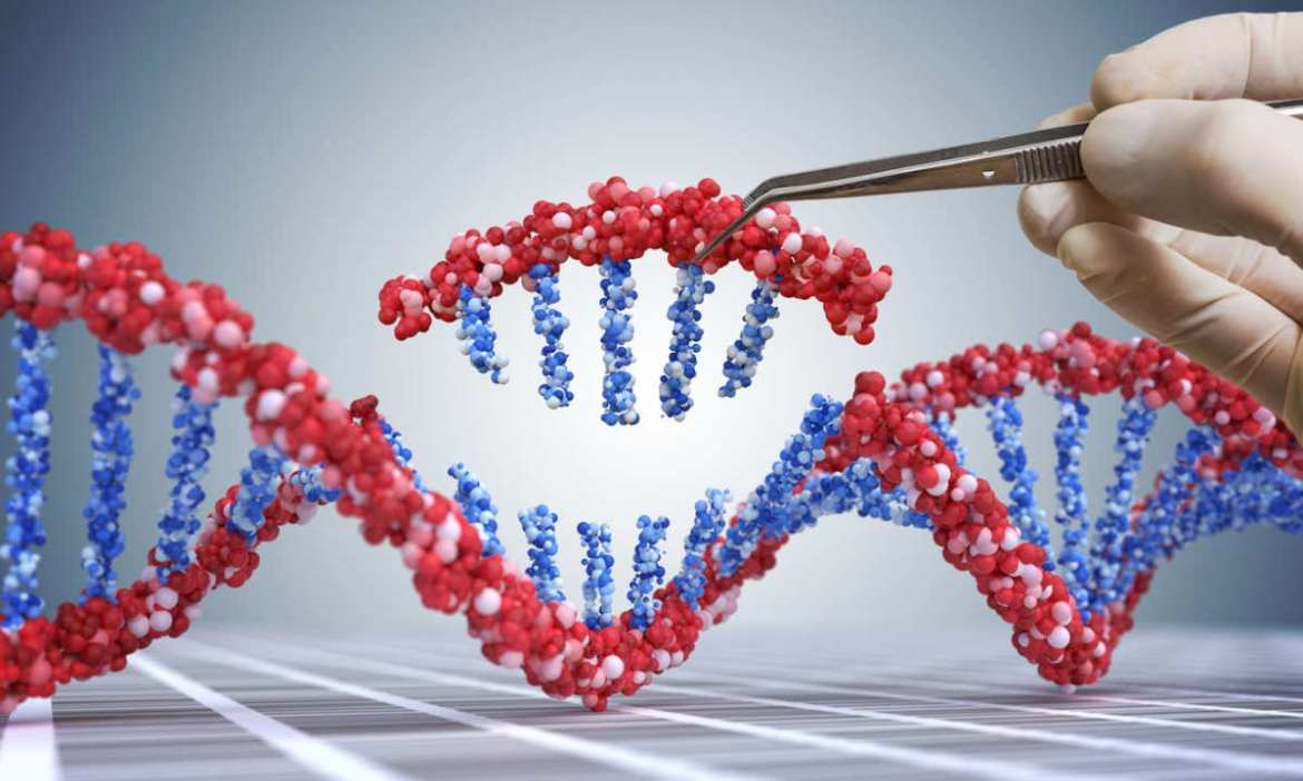 It's in our genome: The key to longevity from human genetics
