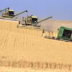βιομηχανική γεωργία, σπόροι, μεταλλάγμένα,