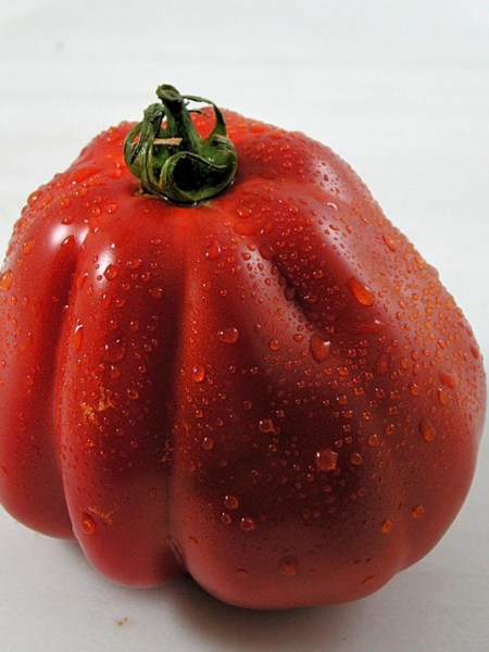 Tomate Cuore di Bue