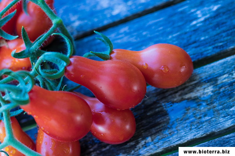 Red Pear Tomate