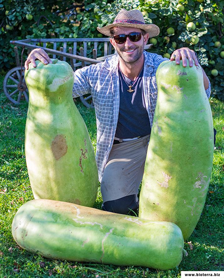 Zucca Gourd Kürbis