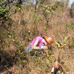 Salazar & Goldstein 2014.  Researcher Ana Salazar establishing 1m2 plots to quantify density and richness of seedlings in recently burned savannas in Central Brazil (Photograph by Daniel Ramirez-Lamus)