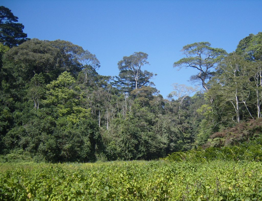 The forest of Sali Forest Reserve in the Mahenge mountains, seen from a wetland margin. (Photo A. Jump)