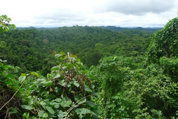 Wanang Conservation Area, Papua New Guinea. Clan leaders opted to protect 10,000 ha of their forest as logging activity in the area increased.