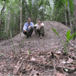 Rainer Wirth and Sebastian Meyer (former PhD student) on the mound of an Atta cephalotes nest. Such nests have been shown to operate as ecological filters by creating a specific disturbance regime that differs from other disturbances in tropical forests. Original results published in Correa et al. 2010, Meyer et al. 2011a and 2011b.