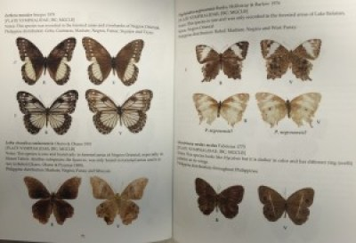 Jade Aster Badon has written a spectacular field guide to the Butterflies Philippines (Mariposa Press).