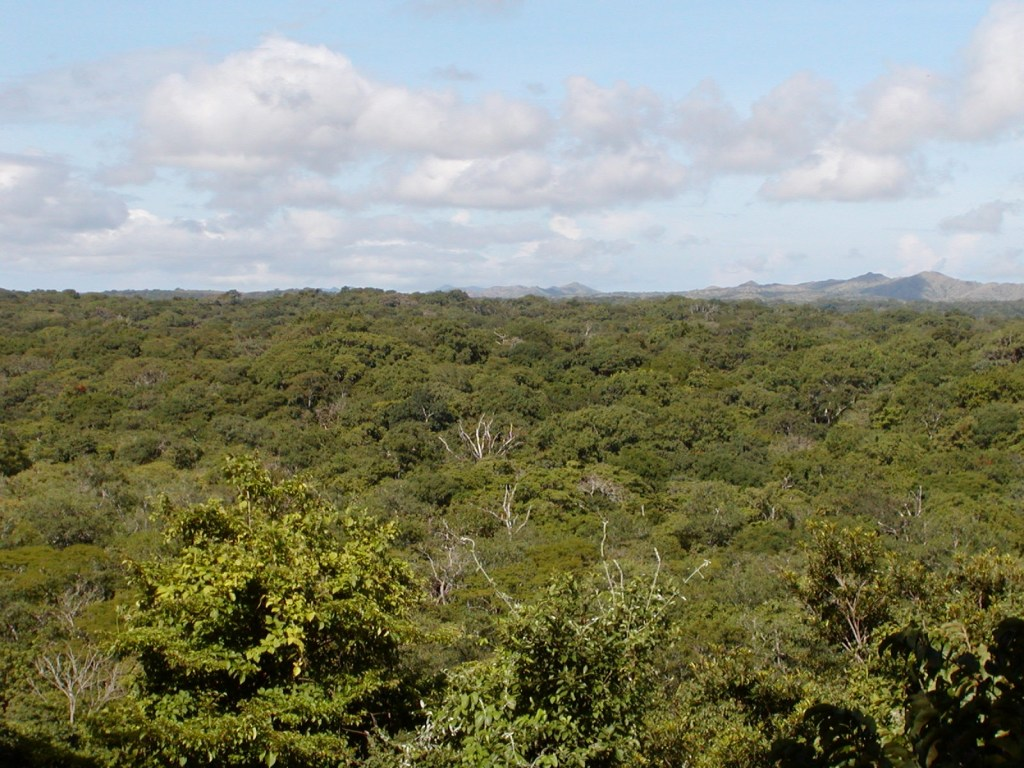 Tropical dry forests in the Área de Conservación Guanacaste, Costa Rica.  Unlike rainforests, these forests experience a 5-6 month dry season from December to May, during which the majority of tree species lose their leaves.  Thi photo was taken in the wet season (May–November). Photo credit: Jennifer Powers.