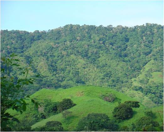 Cerro La Tronosa (La Tronosa Forest Reserve) (Photo: Beatriz Nieto Ariza)