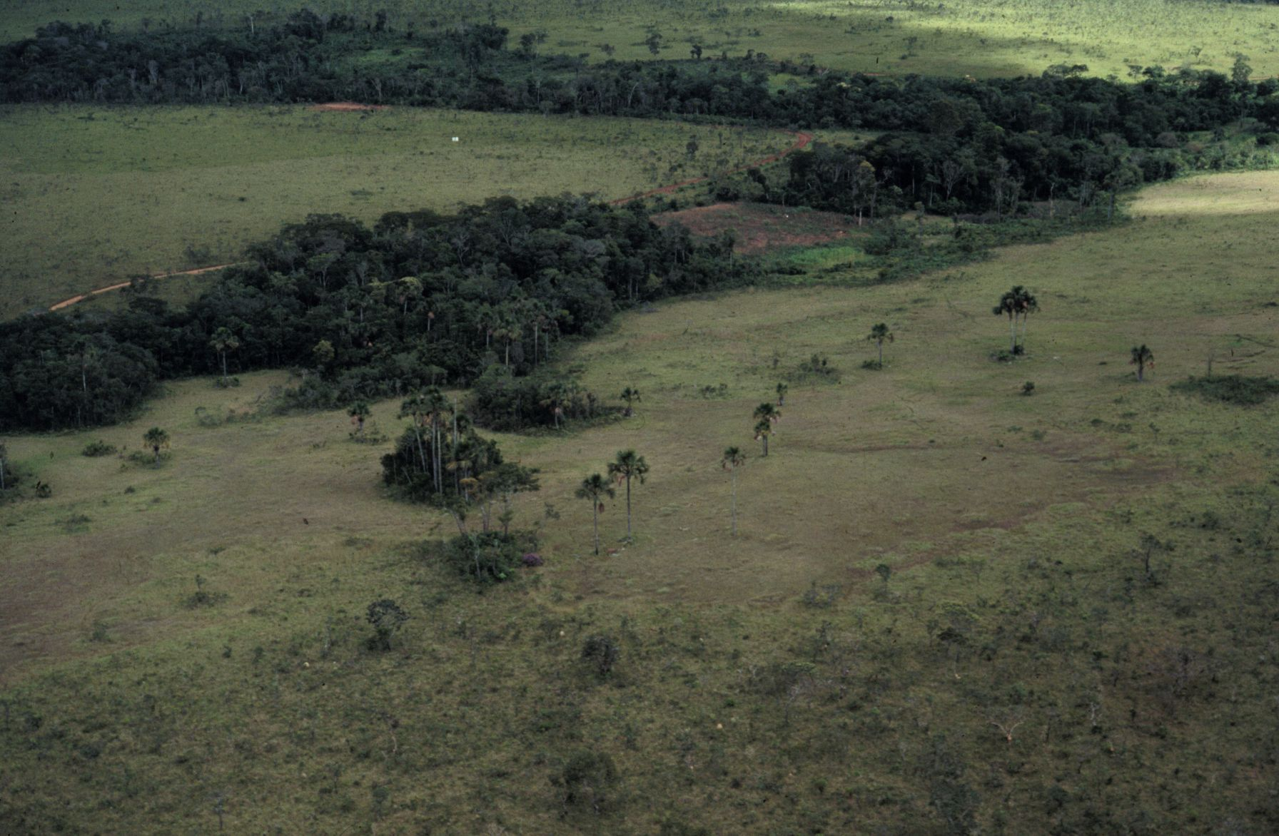 Cerrado is characterized by the patchy distribution of distinct habitats, such as savanna, grasslands and forest habitats (photo credit: P.E. Oliveira).
