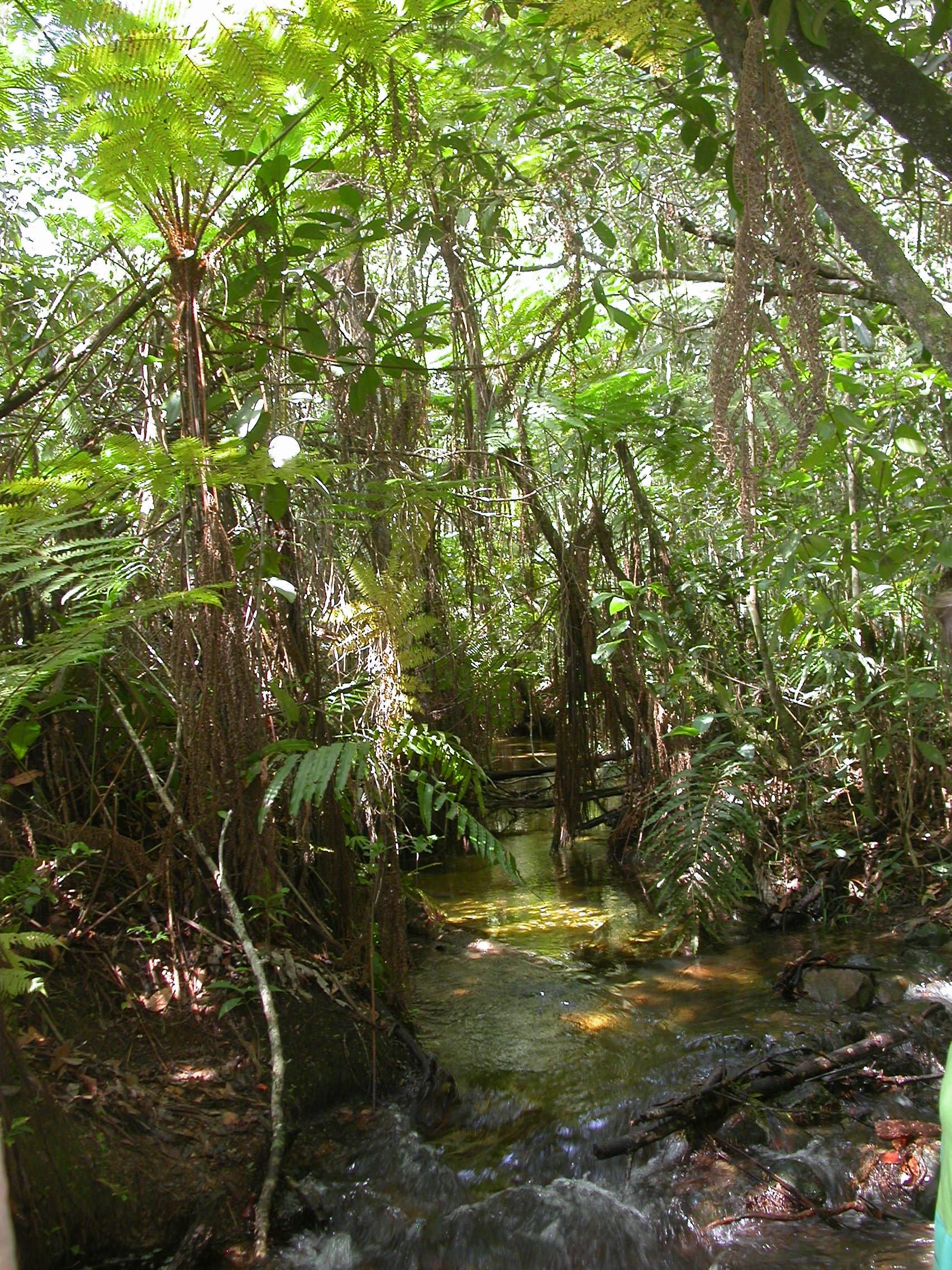 Photo 3: A view of a gallery forest, this type of habitat is associated to streams and illustrates a type of forest habitat where interactions among plants and hummingbirds are phenotypically more specialized (photo credit: Anna Abrahão; from Parque Nacional de Águas Emendadas).