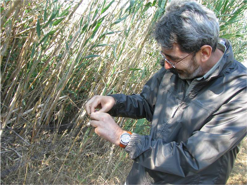 Co-author Germán López-Iborra doing field work (Photo by Ansel Fong).