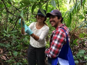 Authors Peter Tellez and Enith Rojas applying a pathogen plug onto leaves in the understory. (Photo: Sunshine Van Bael).