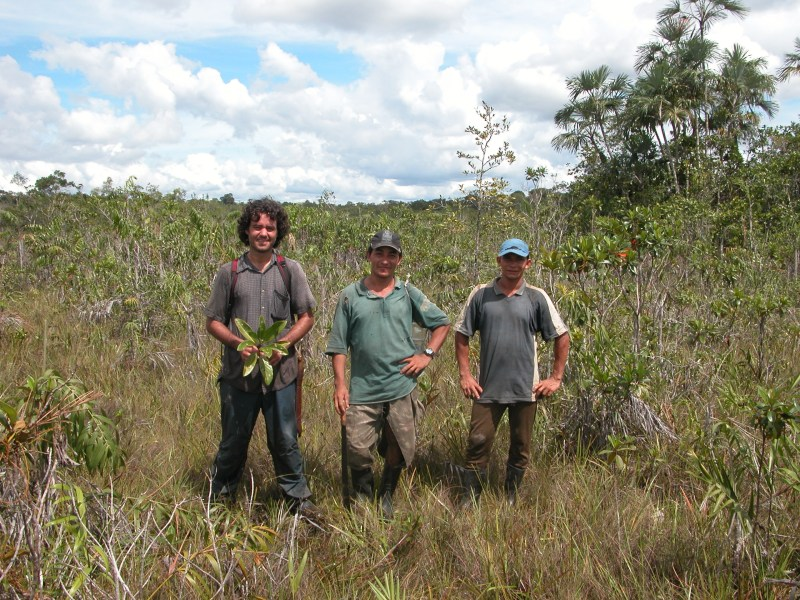 Author Alberto Vicentini with local guides José and Eduardo, after finding Pagamea coriacea in a small, and difficult to reach patch of white-sand savanna near Manicoré, Rio Madeira basin, southern Amazonas in Brazil. (Photo: Edwin Keise)