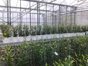Houdbaarheidstest Biovic bij Laan Flora Facilities
