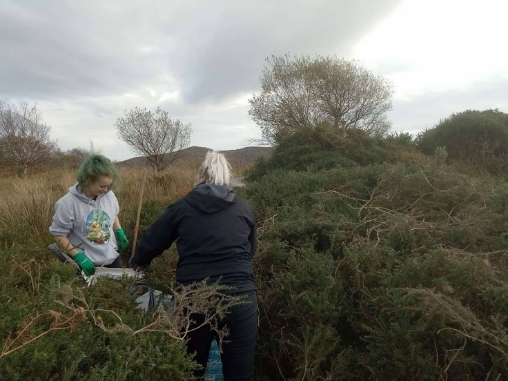 Volunteers creating clearings in dense gorse. Such openings operate as sun traps, forming important basking spots for reptiles such as adders. Credit: Katy Haines