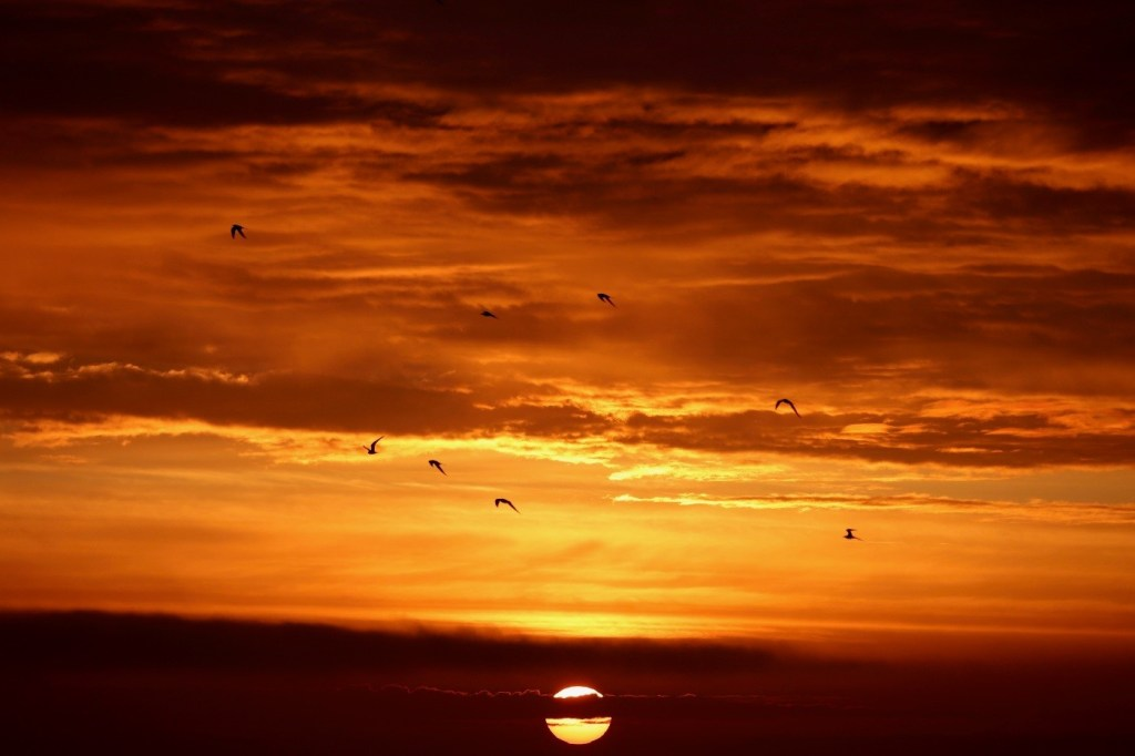 Terns flying around Rockabill Island at Sunset. (Image Credit: Lorna Gill, taken under NPWS licence)