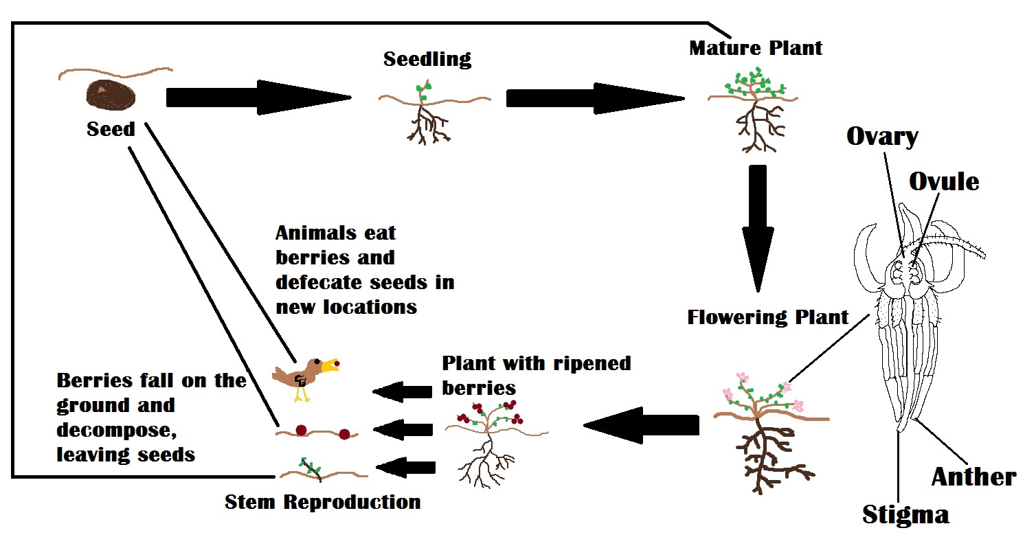 Flower Reproduction Diagram