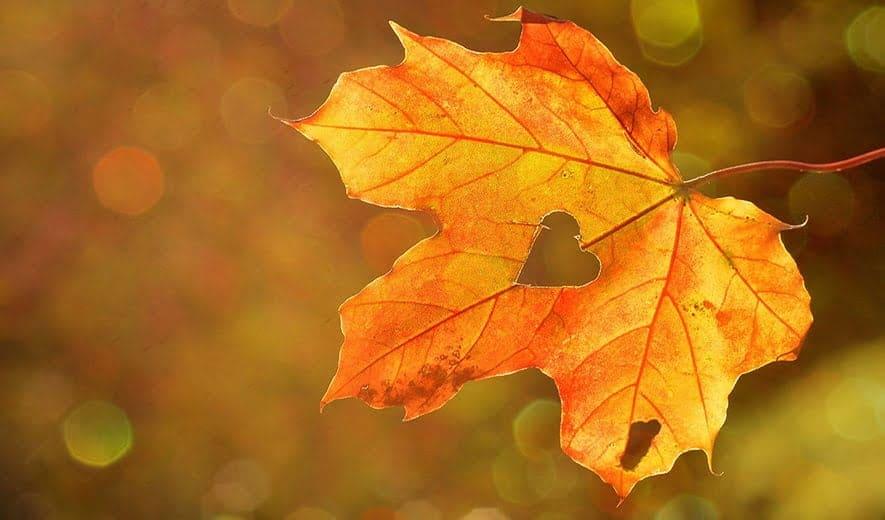 Consejos de belleza para hacer frente al otoño