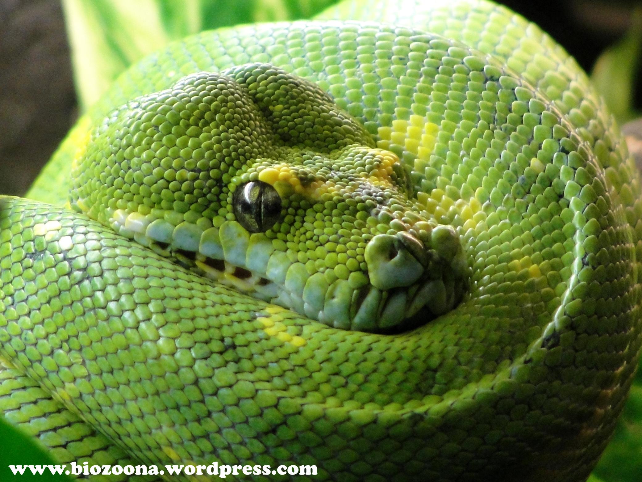 Para Gustos Reptiles