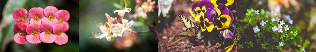 Homepage-flowers