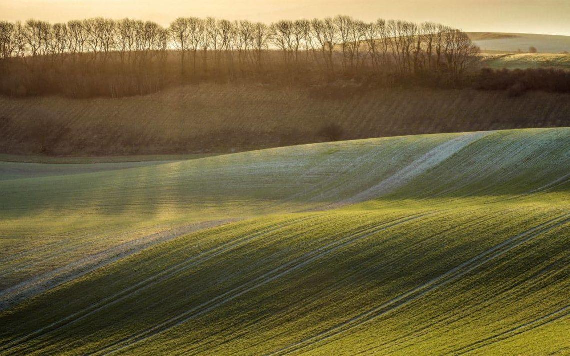 Greening-Berwick-FinnHopson-min