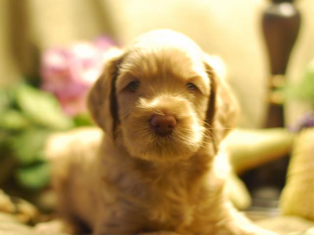 Barney-5-weeks