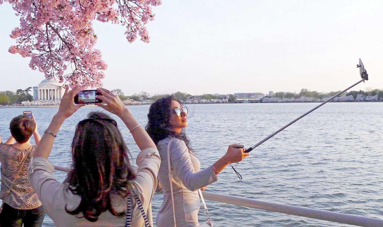 blossoms-stick0697-r