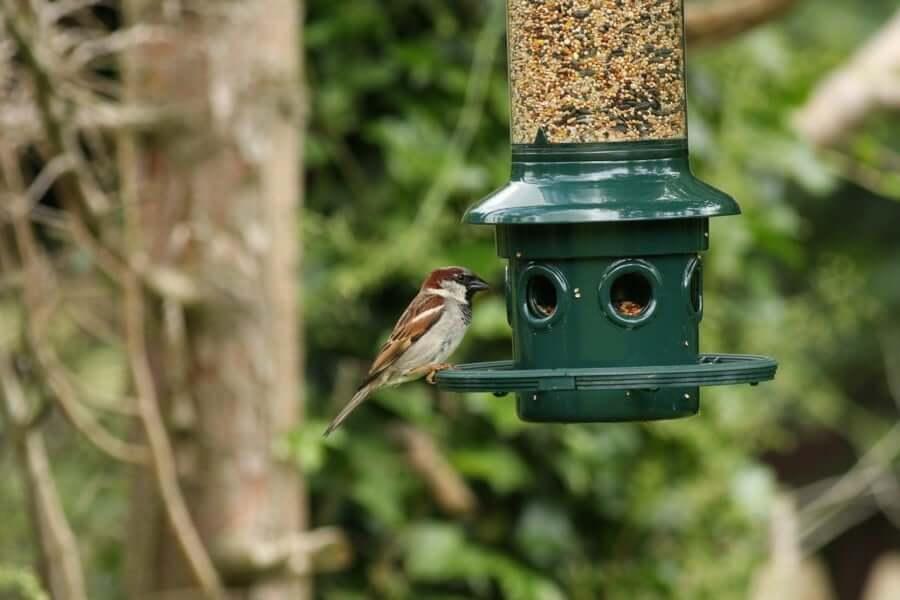 Buy The Best Bird Feeder Pole For Your Bird Habitat