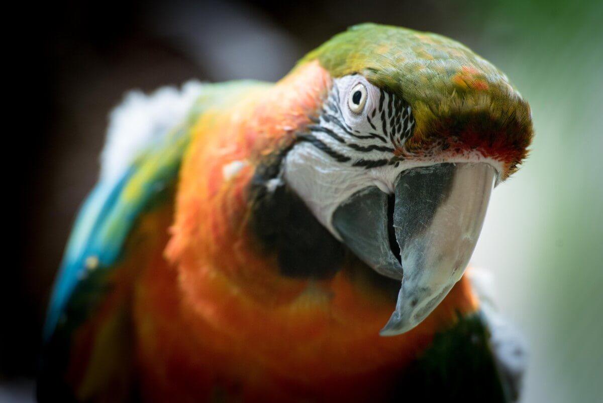 Beautiful Birds Images Free